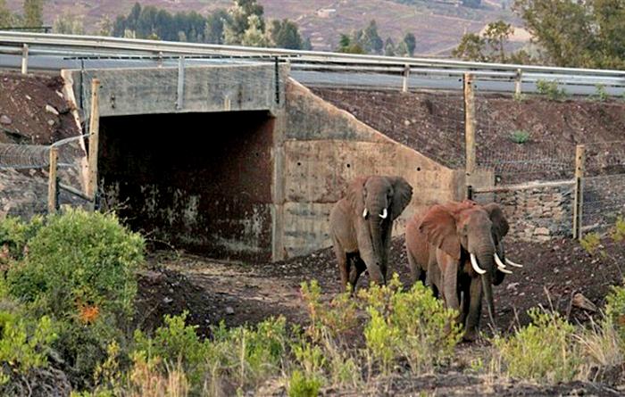 Тоннель для слонов в Кении